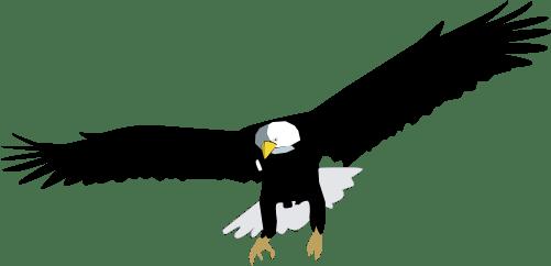 Haliaeetus Leucocephalus Bald Eagle Birds Vector