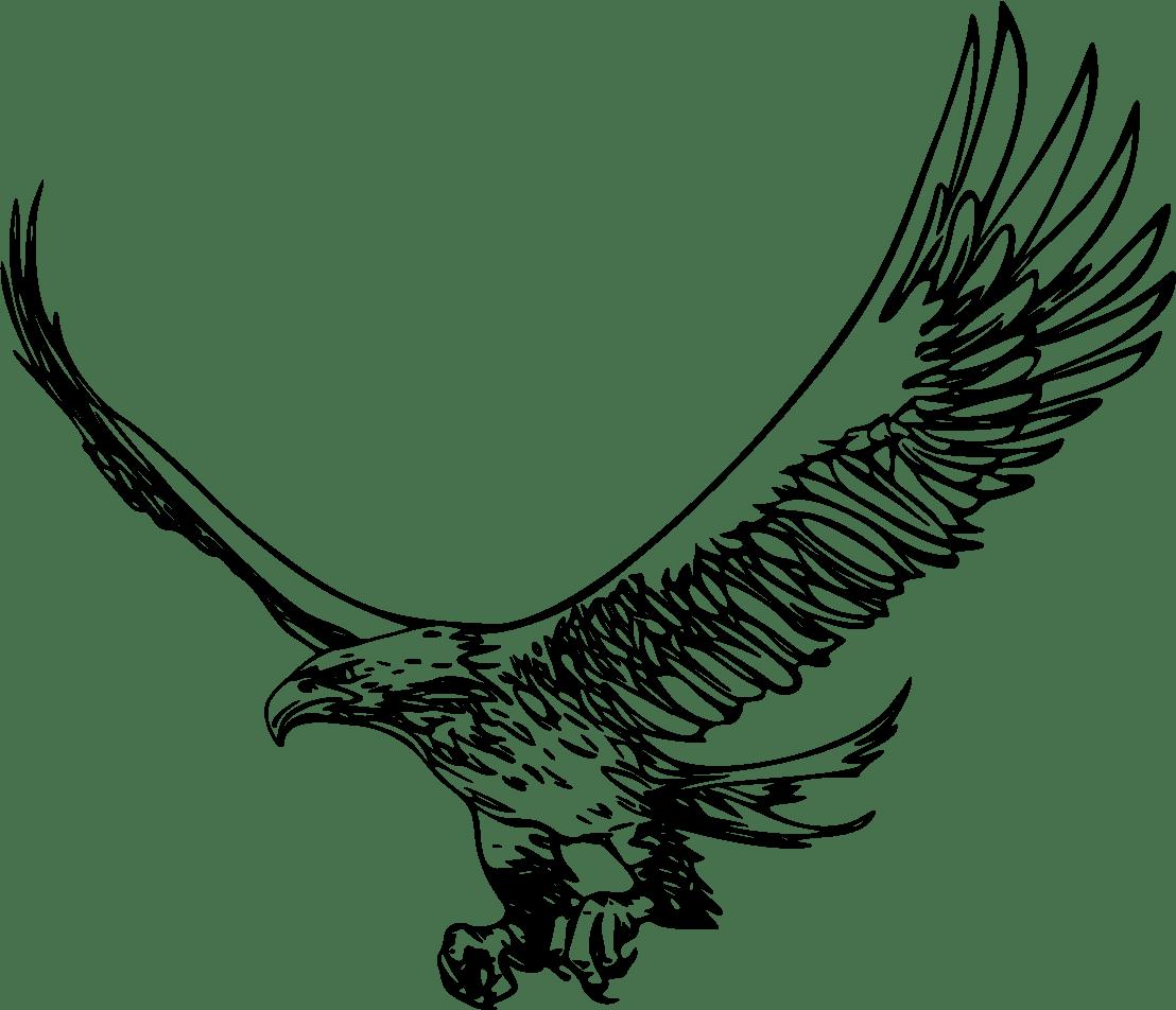 Zeus Eagle Outline Picture Zeus Eagle Outline Image