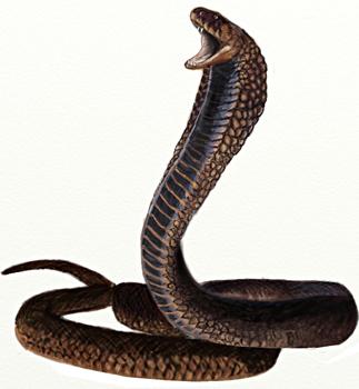 Free Snake Drawing, Download Free Clip Art, Free Clip Art ...