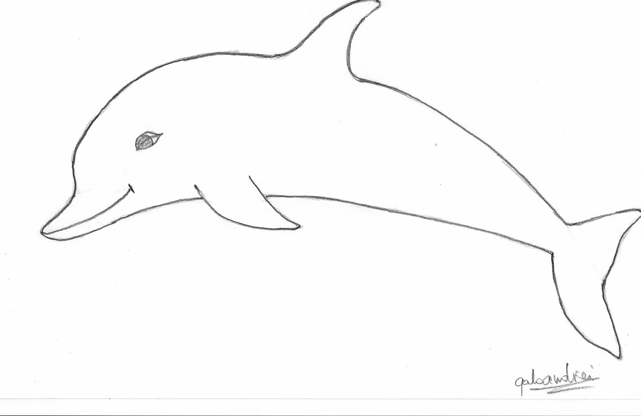 Free Line Drawing Of Dolphin Download Free Clip Art Free