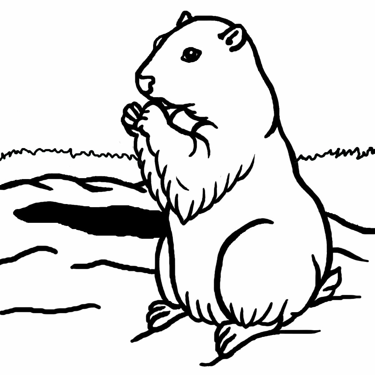 Groundhog Shadow Clipart Images Pictures