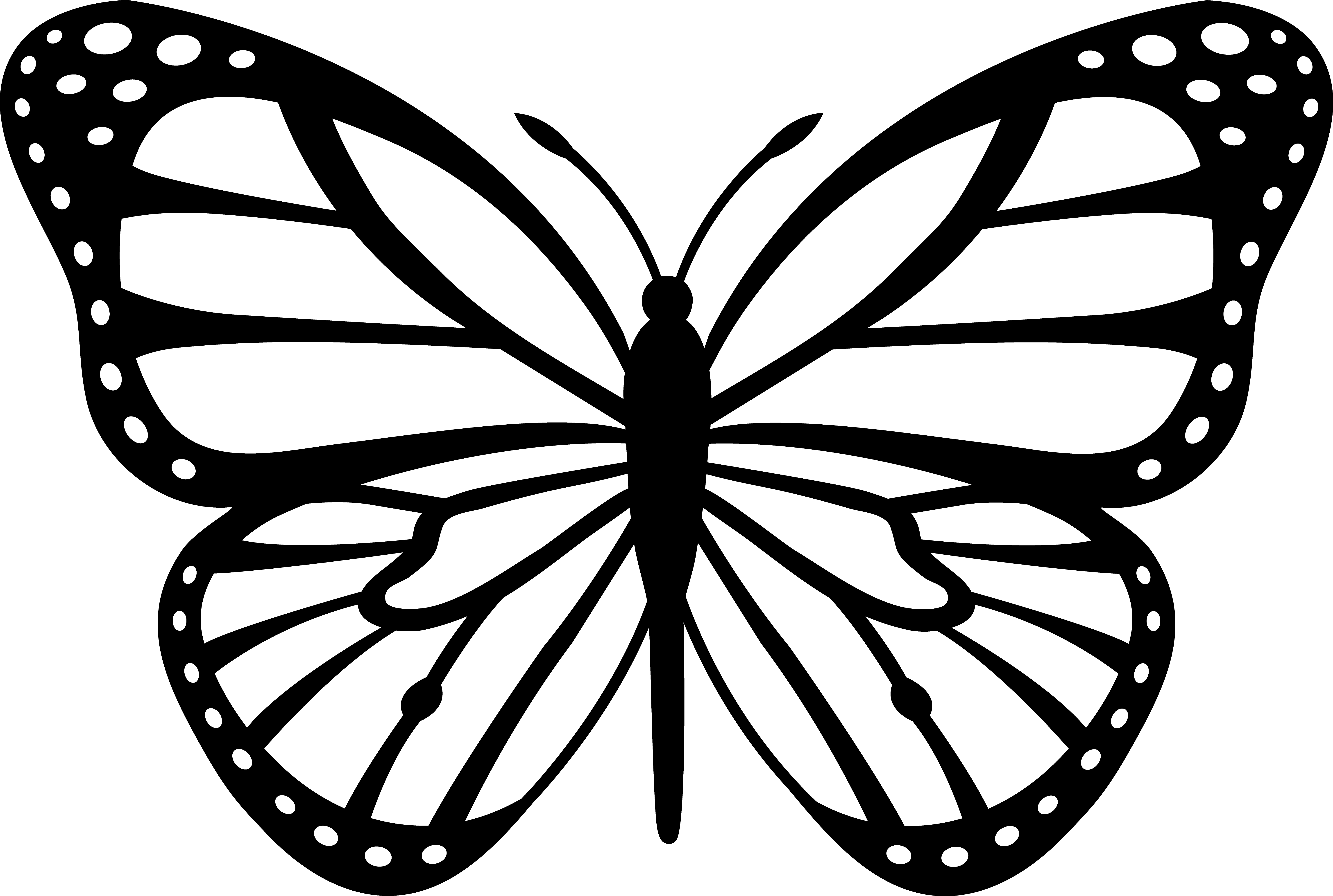Free Butterfly Outlines Download Free Clip Art Free Clip