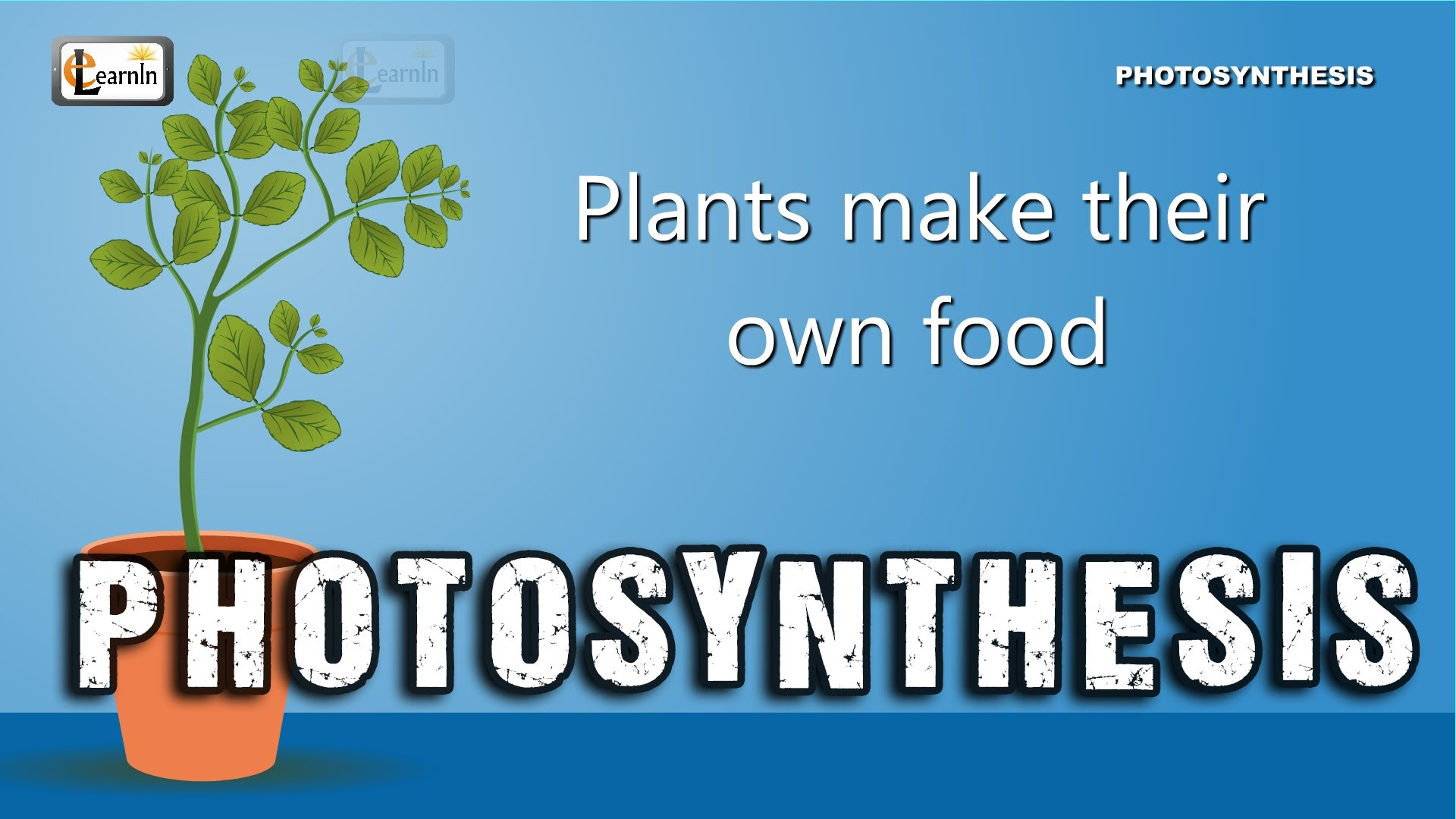 Free Photosynthesis For Kids Download Free Clip Art Free