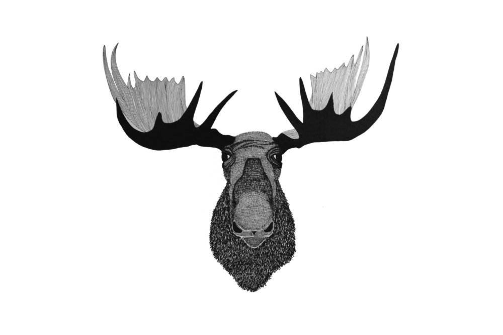 Free How To Draw A Moose Face Download Free Clip Art
