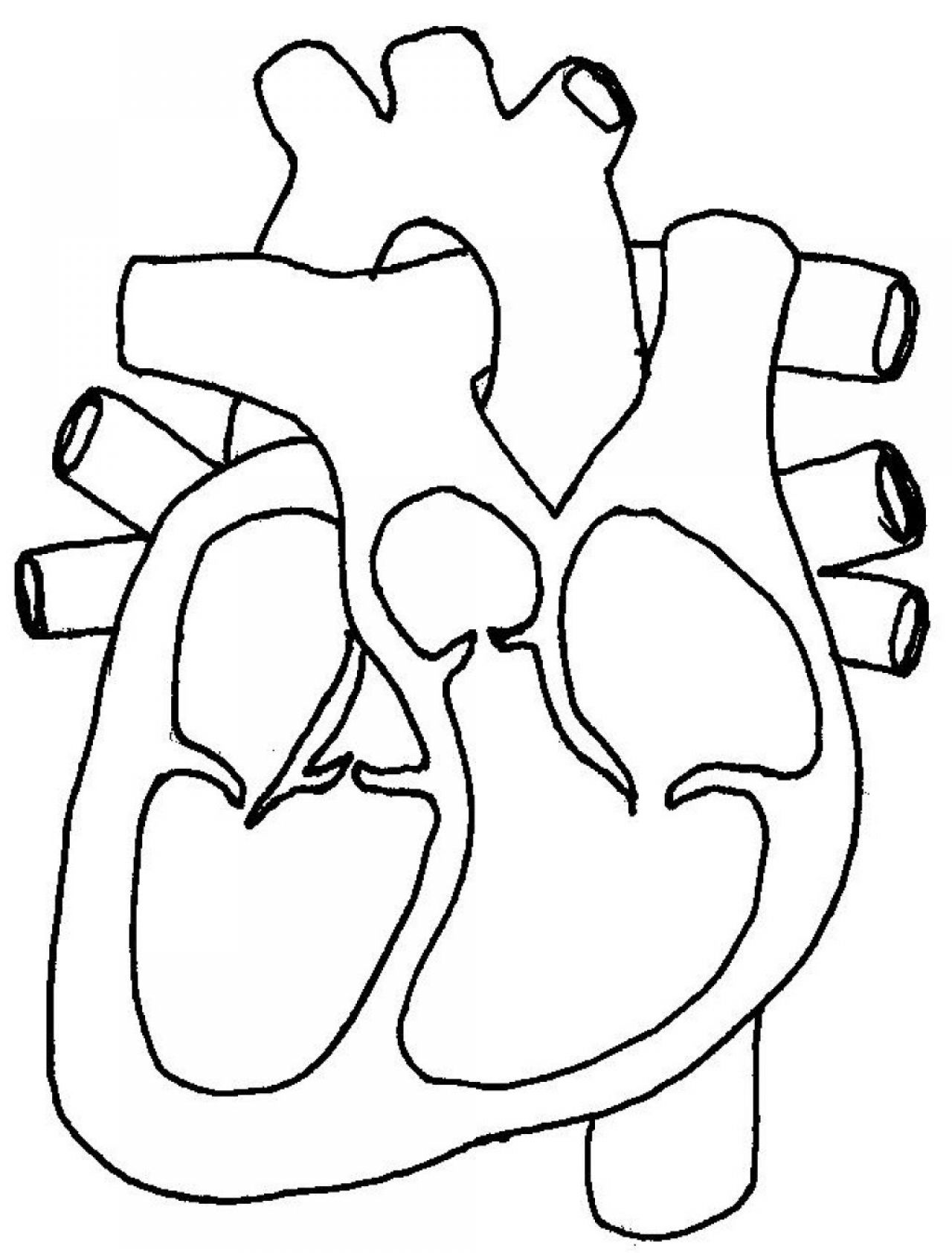 Free Blank Heart Diagram Download Free Clip Art Free Clip Art On Clipart Library
