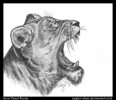 Free Lion Head Drawing Download Free Clip Art Free Clip