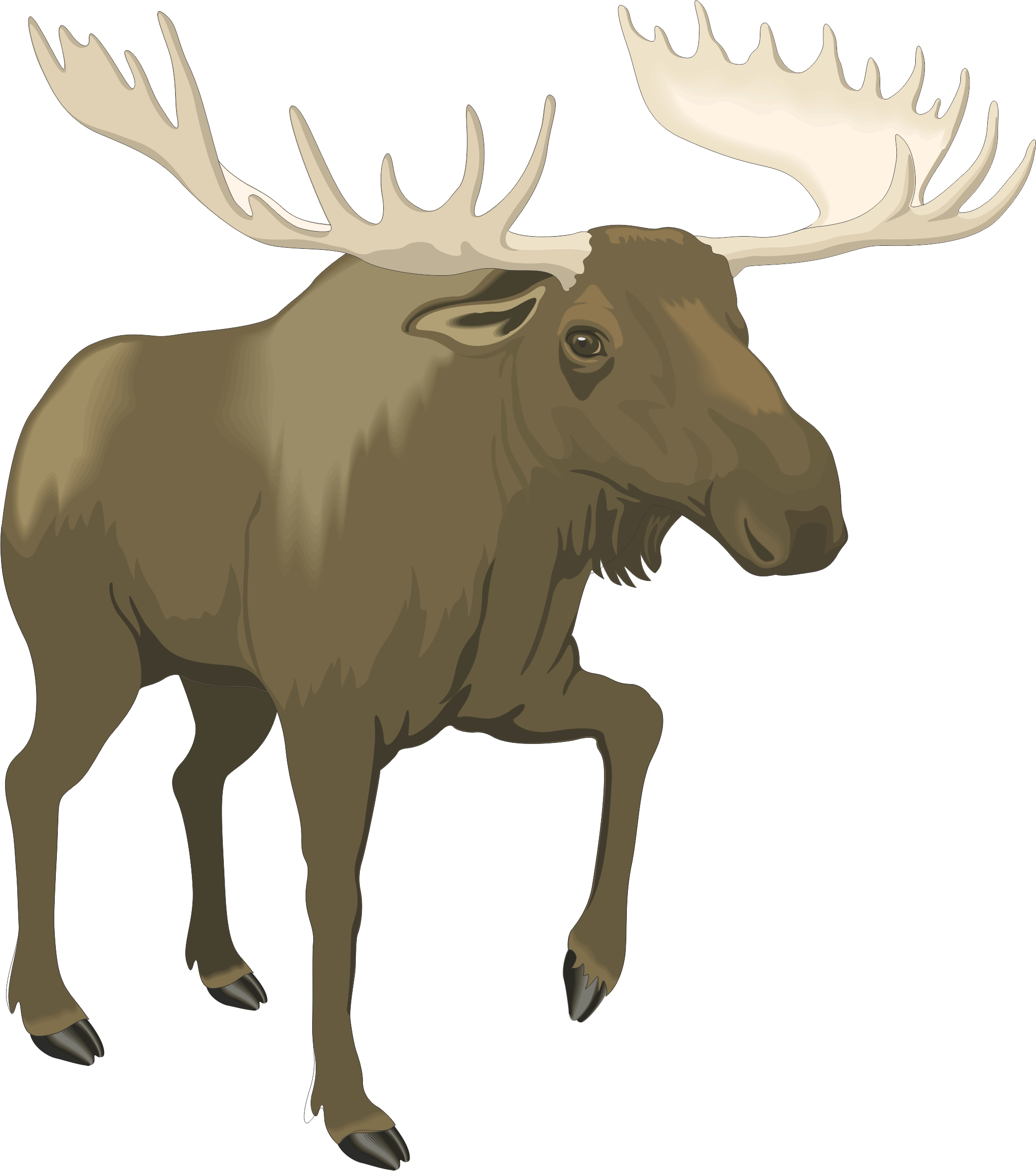 Free Cartoon Moose Images Download Free Clip Art Free