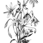 Free Drawings Of Flowers In Black And White Download Free Clip Art Free Clip Art On Clipart Library