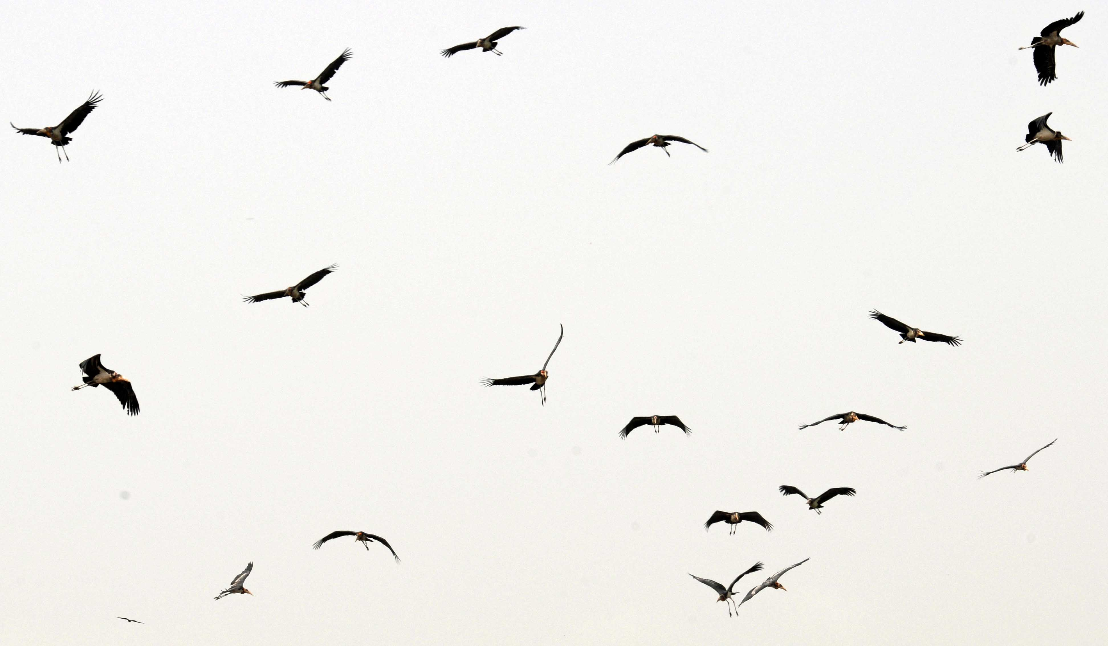 Free Flying Bird Download Free Clip Art Free Clip