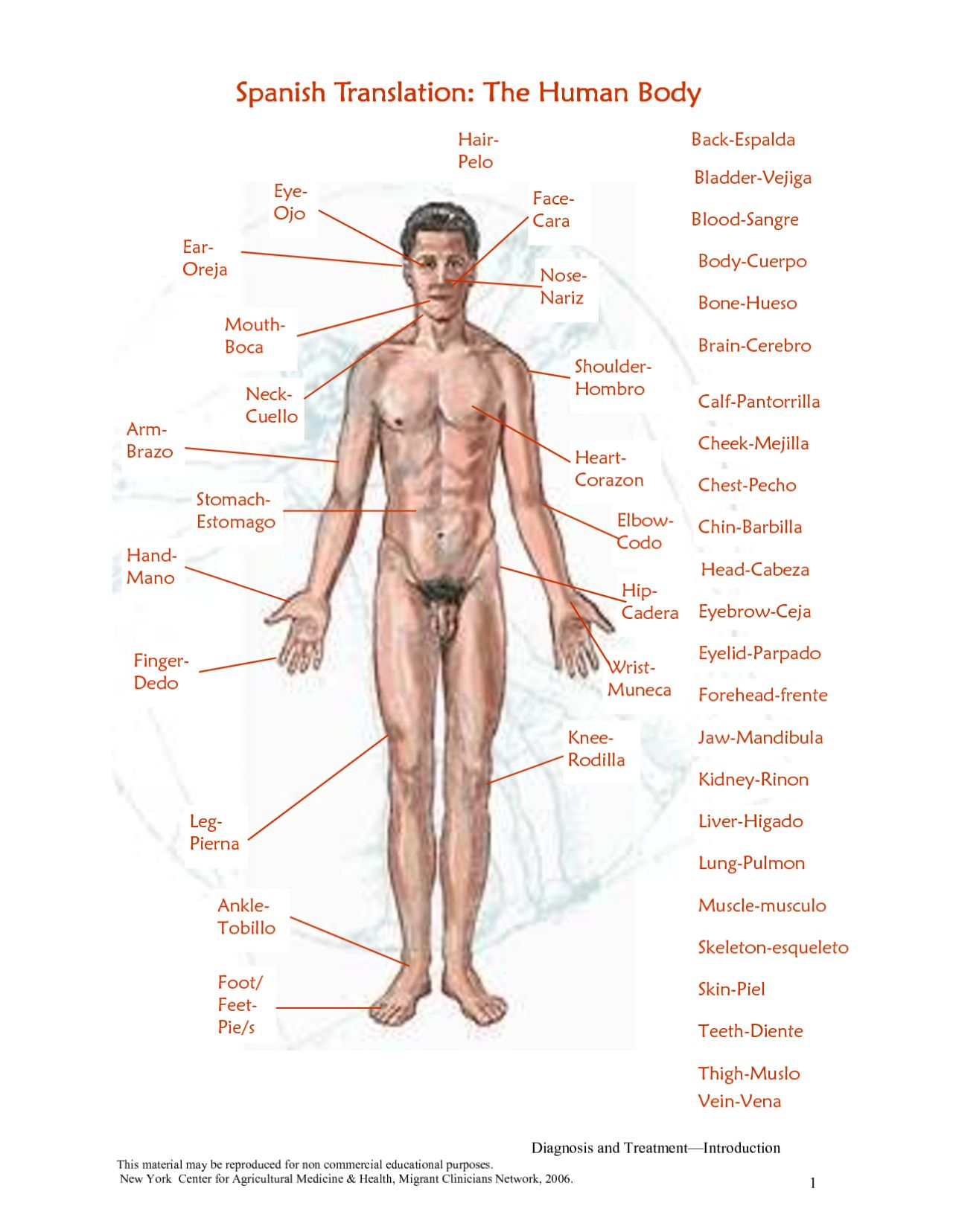 Free Human Body Parts Download Free Clip Art Free Clip