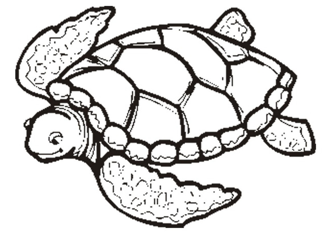 Free Turtle Outline Download Free Clip Art Free Clip Art On Clipart Library