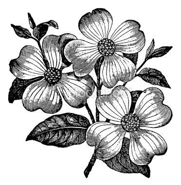 Free Art Flowers Download Free Clip Art Free Clip Art On Clipart Library