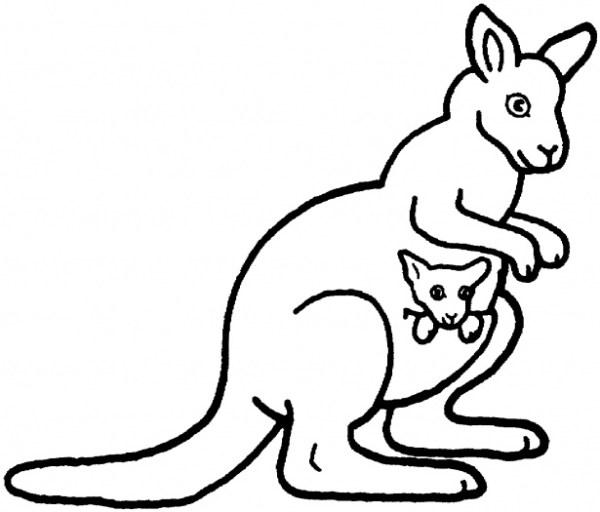 kangaroo coloring pages # 5