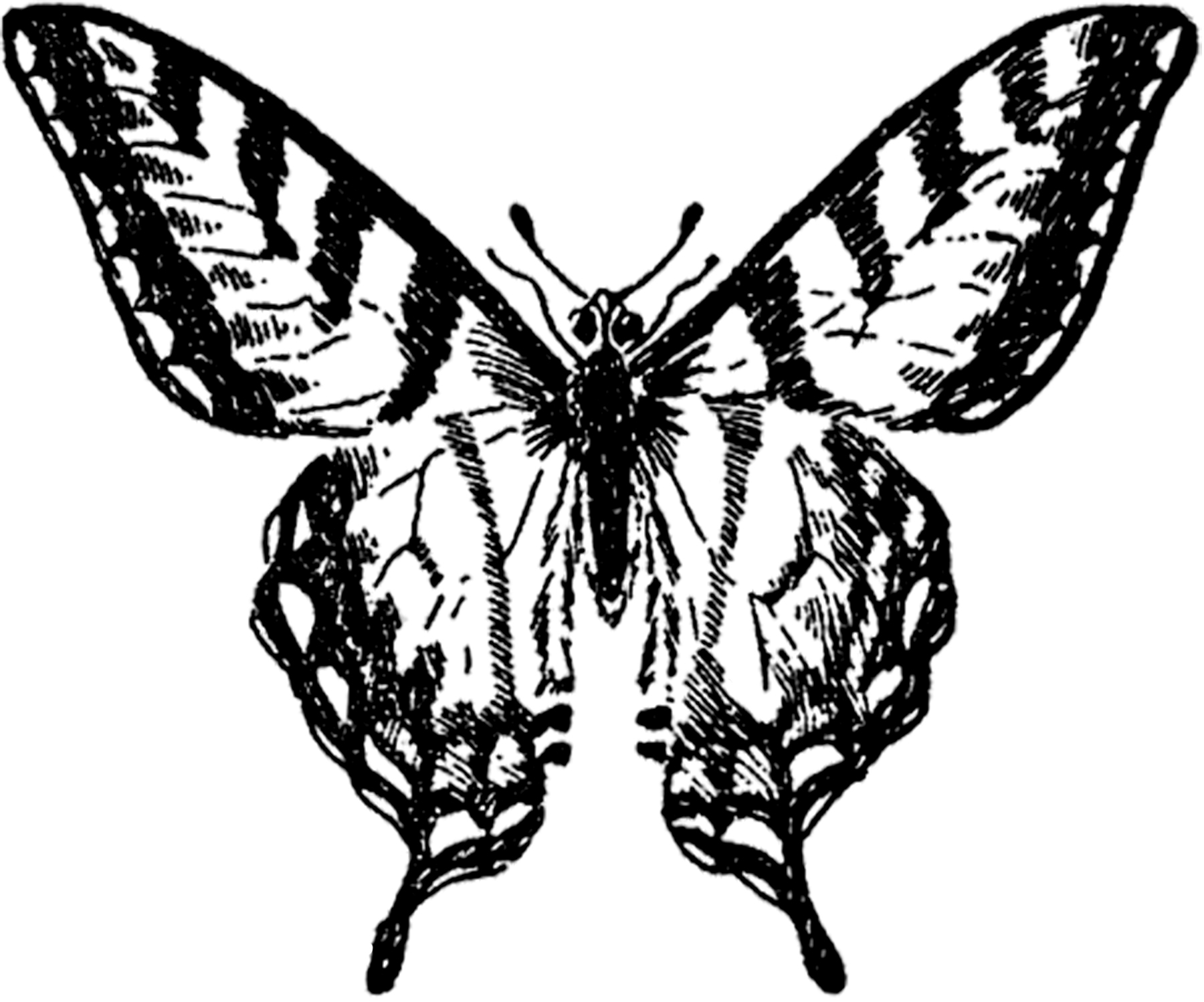 Old Butterfly Clipart Illustrations