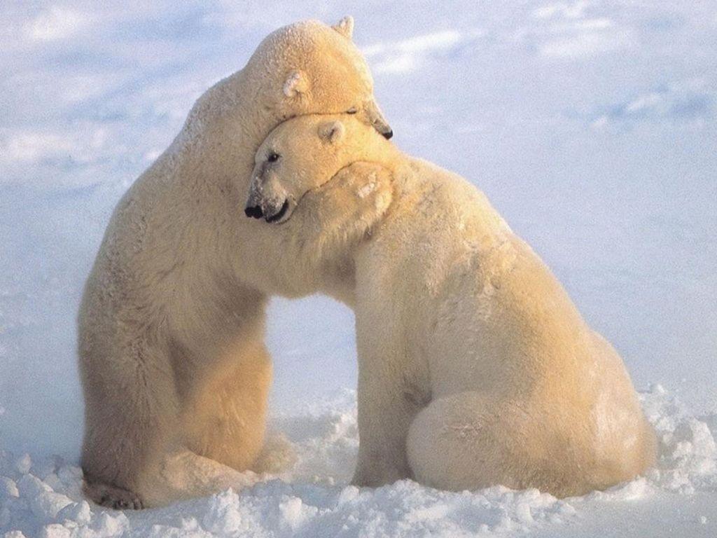 Image result for comfort hug