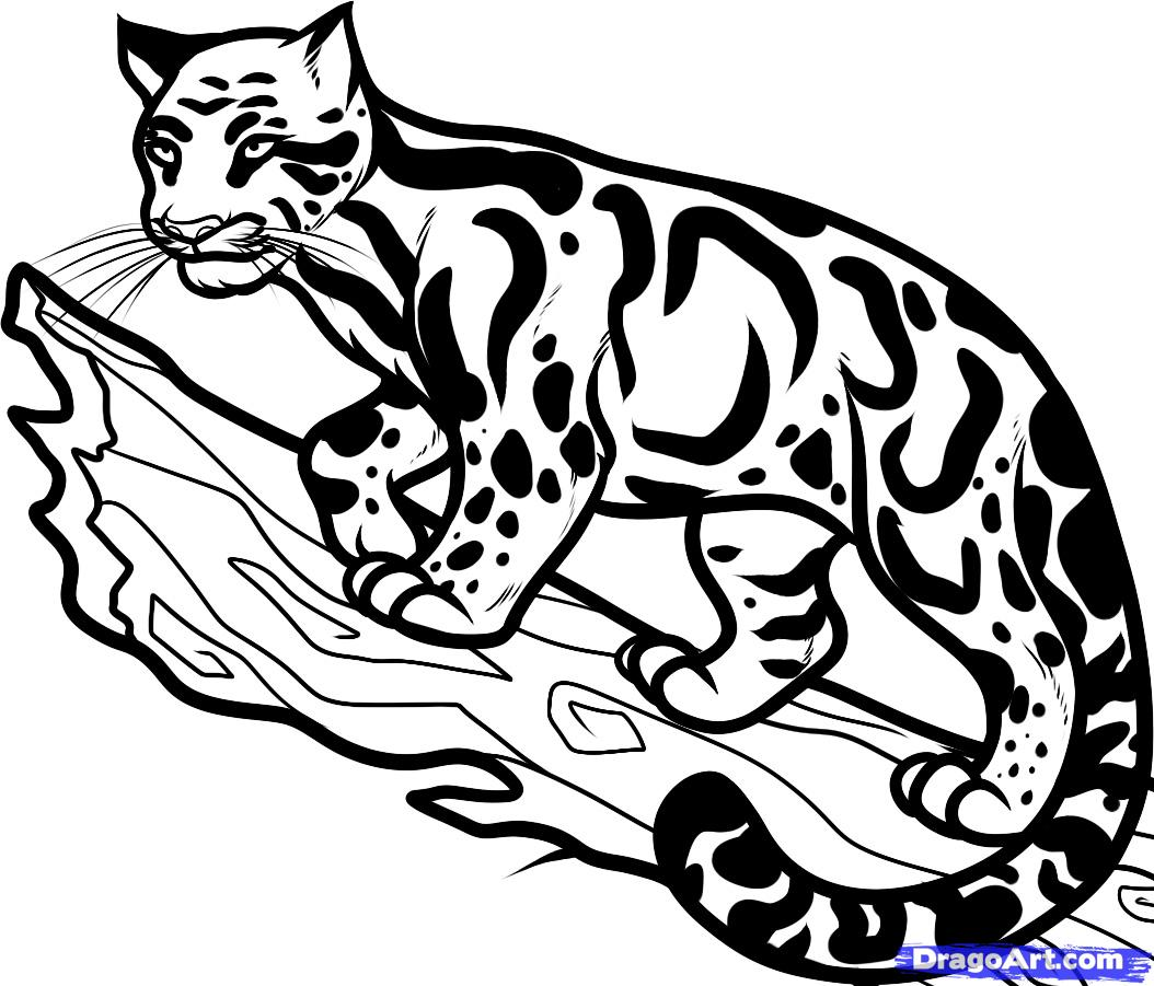 How To Draw A Clouded Leopard Clouded Leopard Step By Step