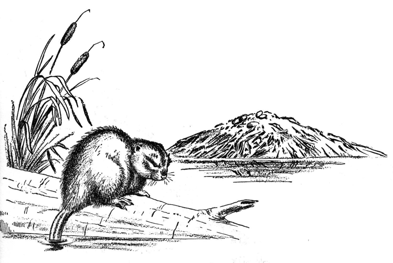 Free Beaver Dam Cliparts Download Free Clip Art Free