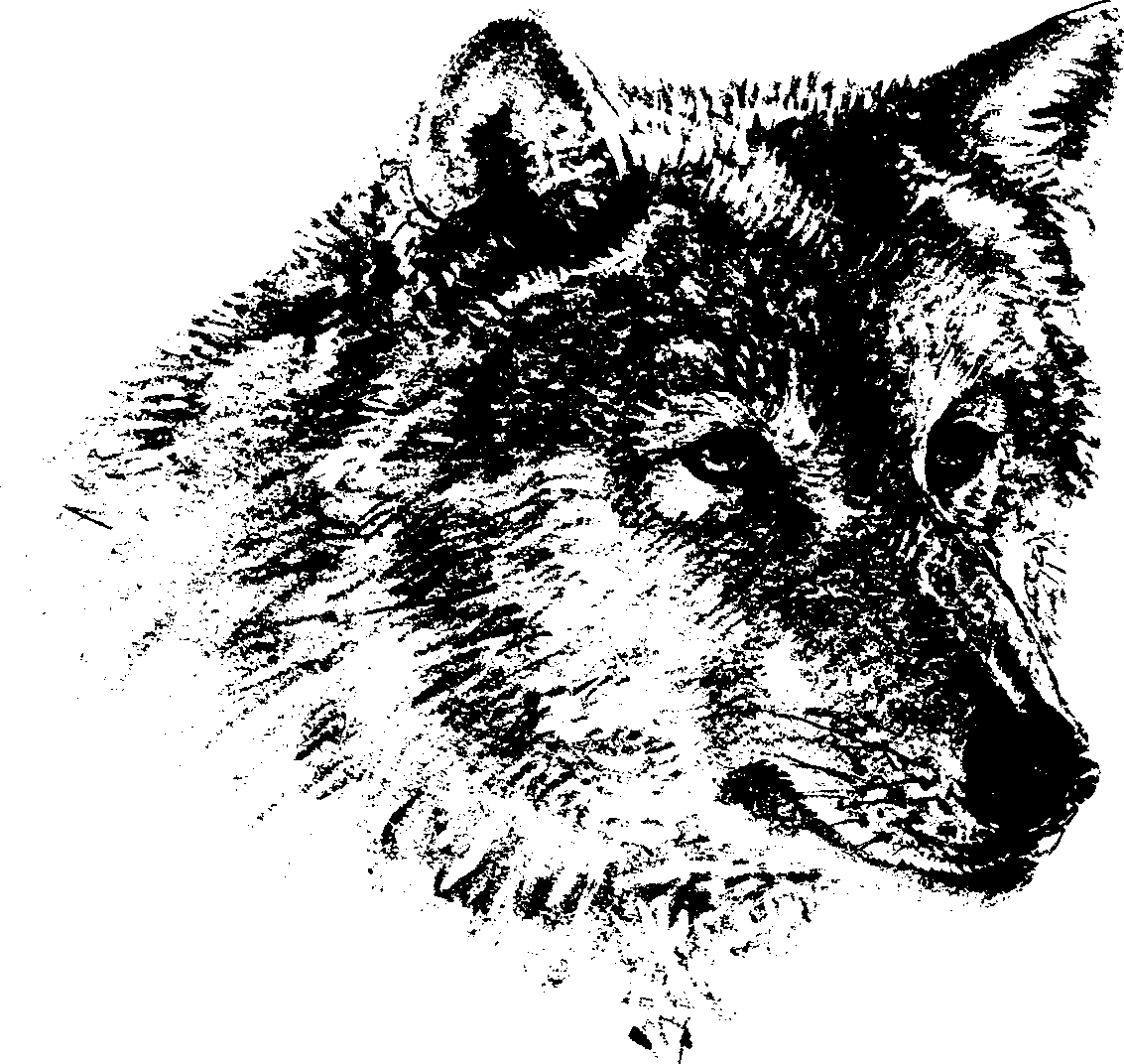 Timber Wolf Clipart