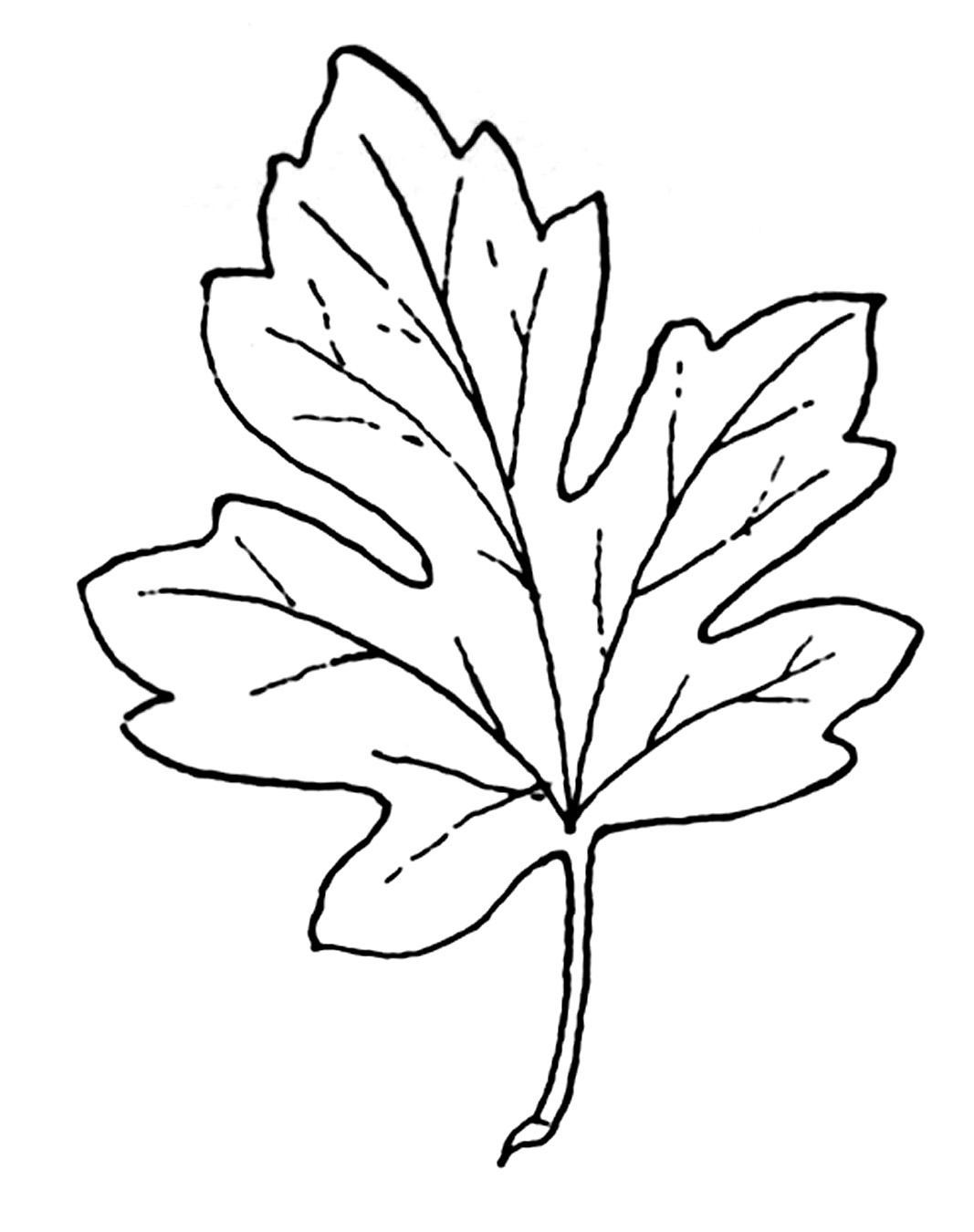 Free Pumpkin Leaf Cliparts Download Free Clip Art Free