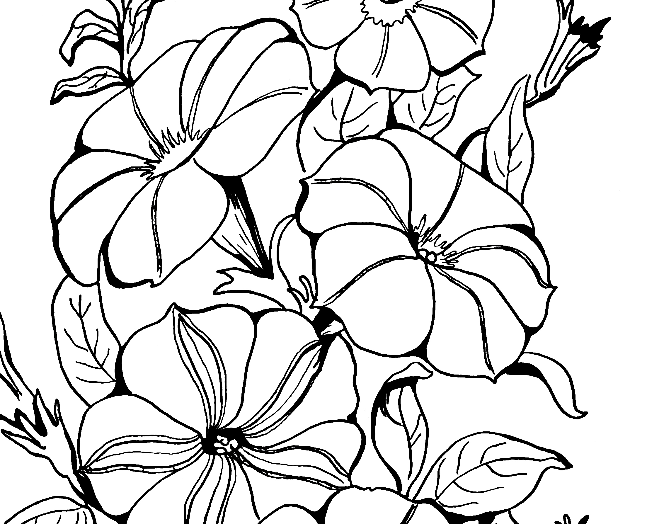 Free Petunia Flower Cliparts Download Free Clip Art Free