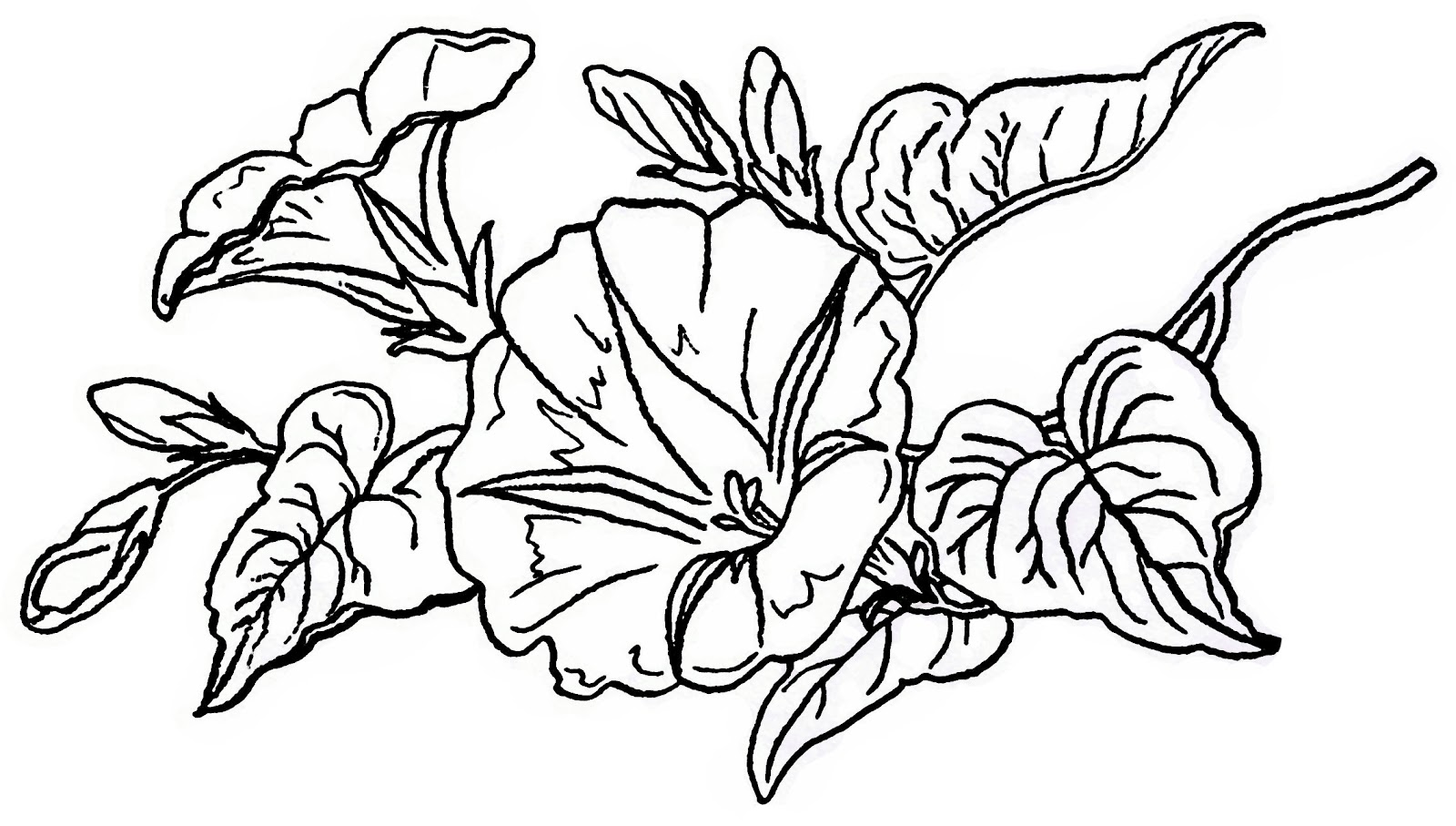 Free Lilac Flower Cliparts Download Free Clip Art Free