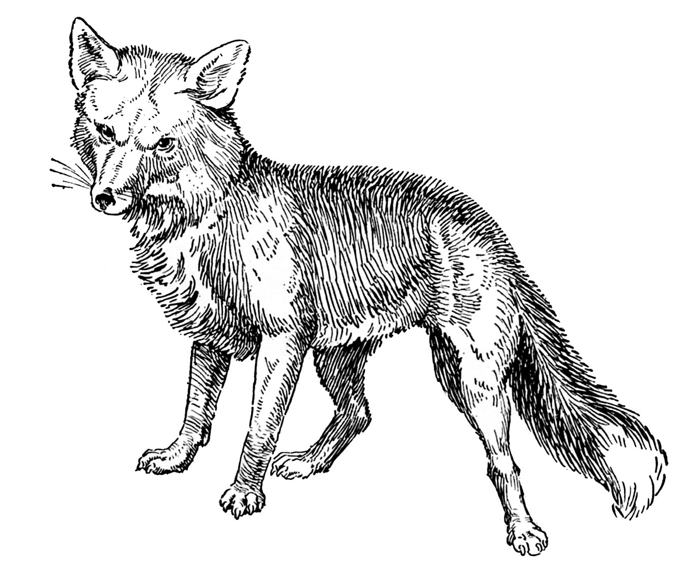 Free Victorian Animal Cliparts Download Free Clip Art