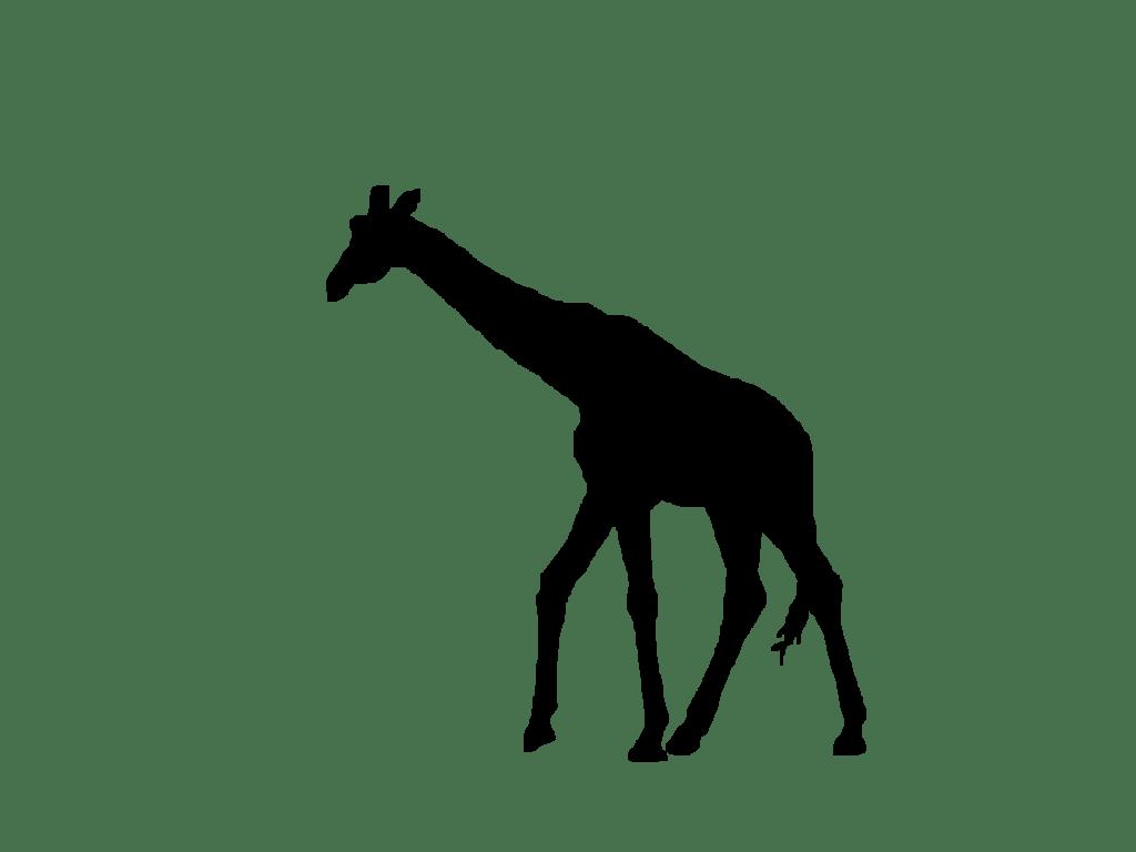 Free Zebra Silhouette Cliparts Download Free Clip Art