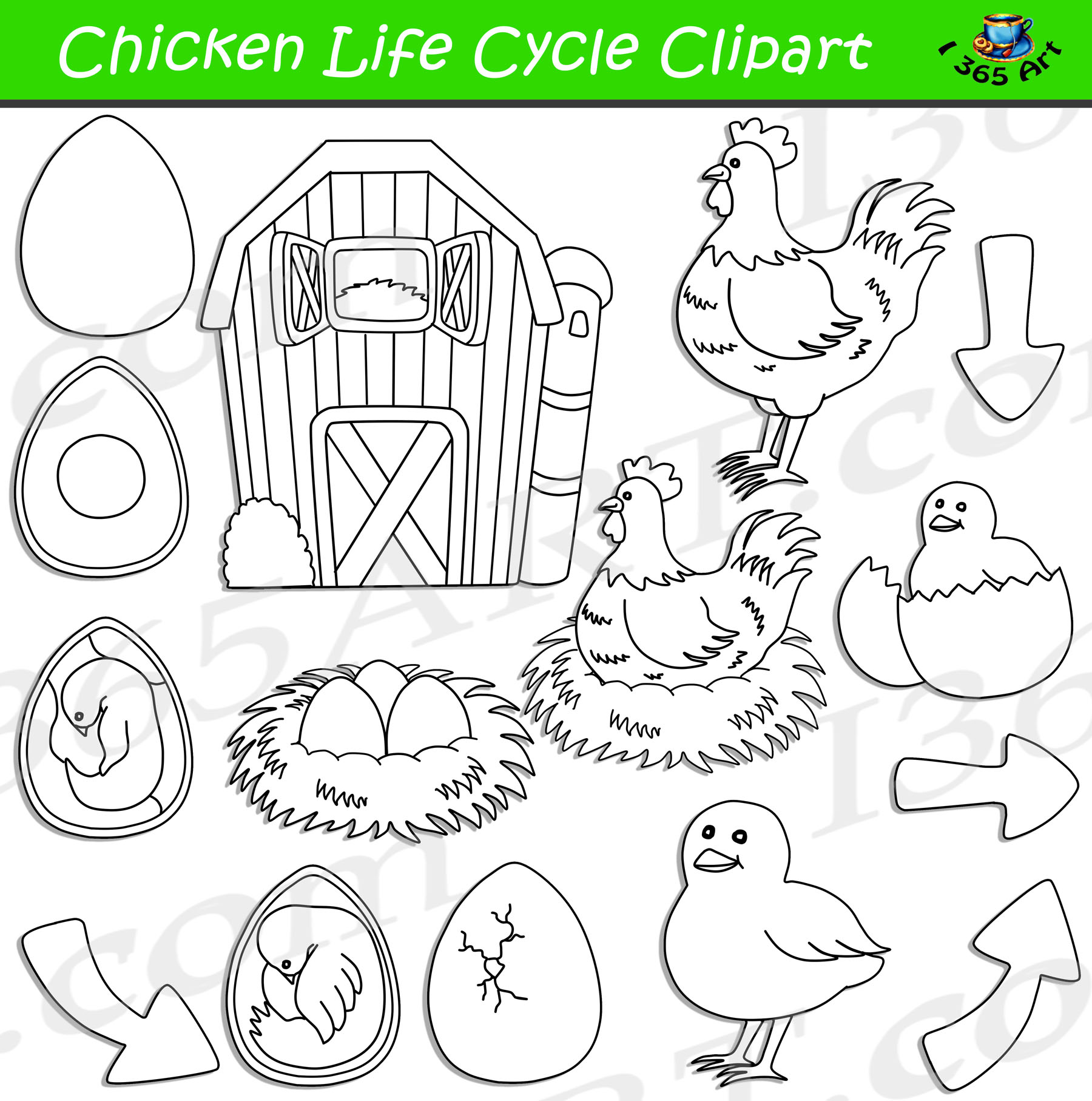 Chicken Life Cycle Clipart Bundle