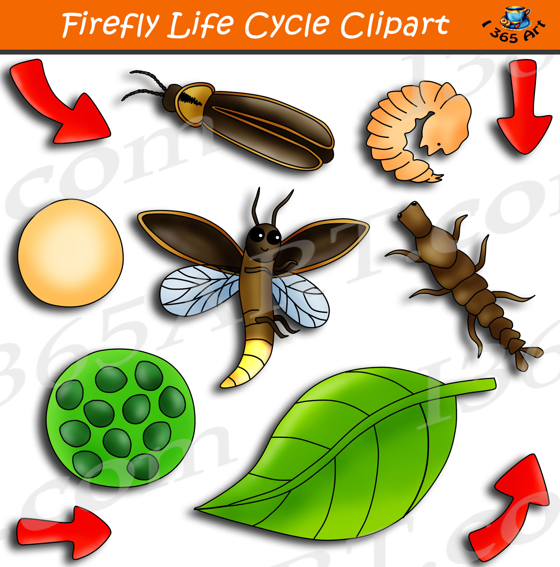 Firefly Life Cycle Clipart Graphics Bundle