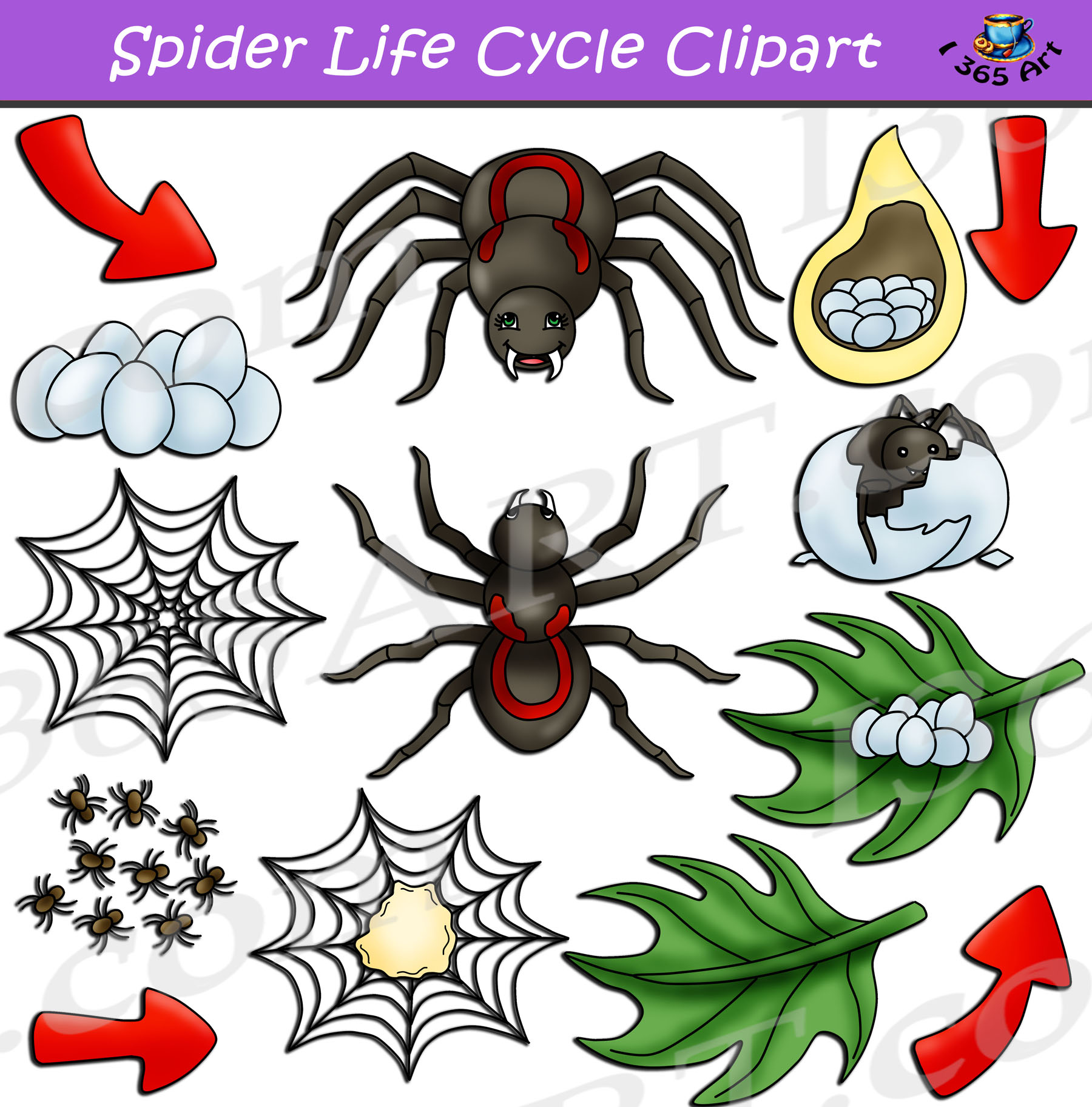 Spider Life Cycle Clipart Bundle Download