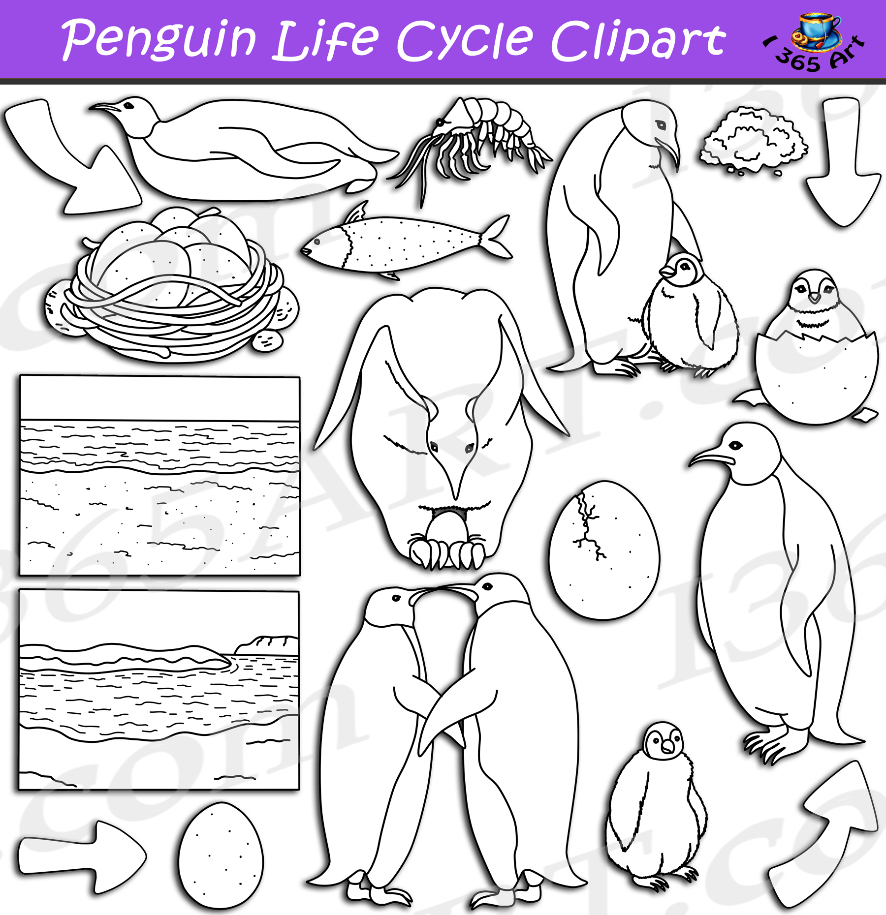 Penguin Life Cycle Clipart Graphics Set