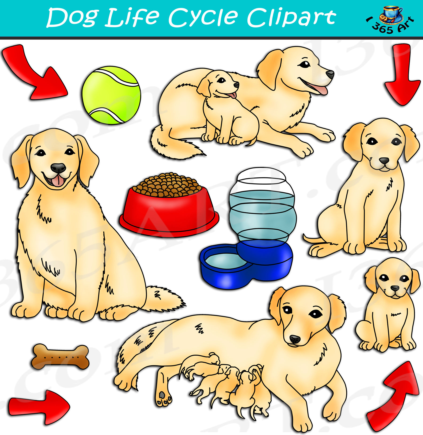 Dog Life Cycle Clipart Graphics Download Clipart 4 School