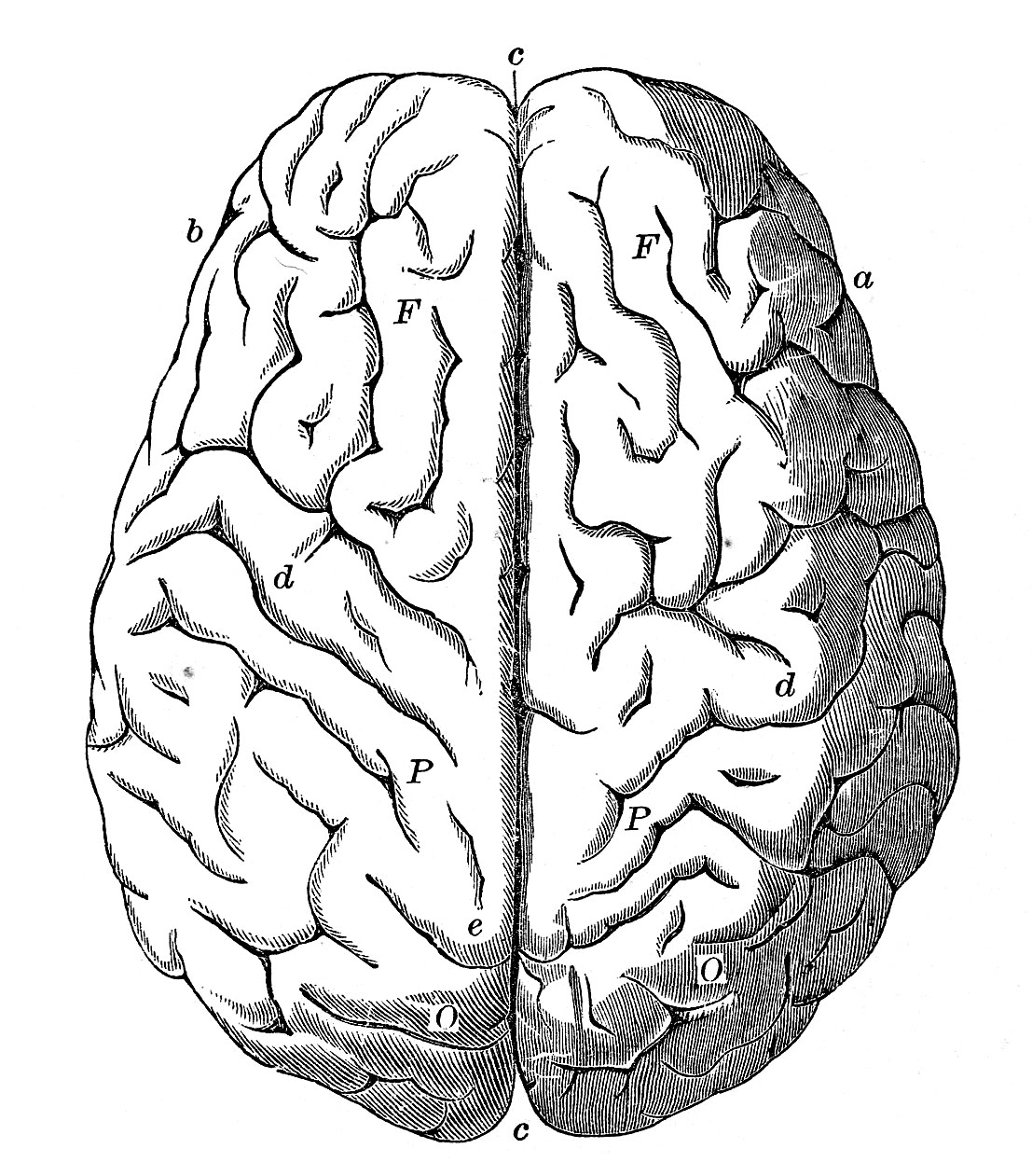 Library Of Brain Frontal View Svg Royalty Free Stock Black