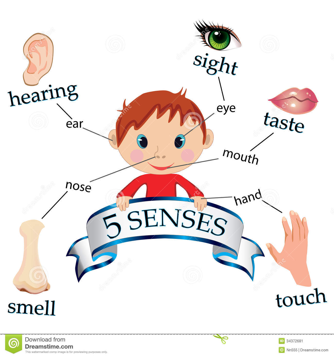 Library Of My Five Senses Transparent Download