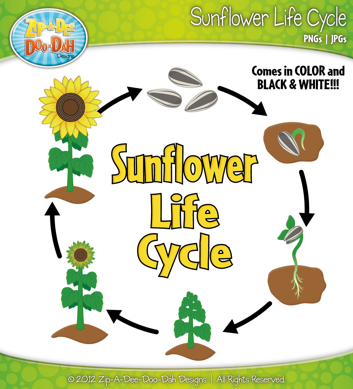 Library Of Plant Life Cycle Svg Free Files Clipart Art