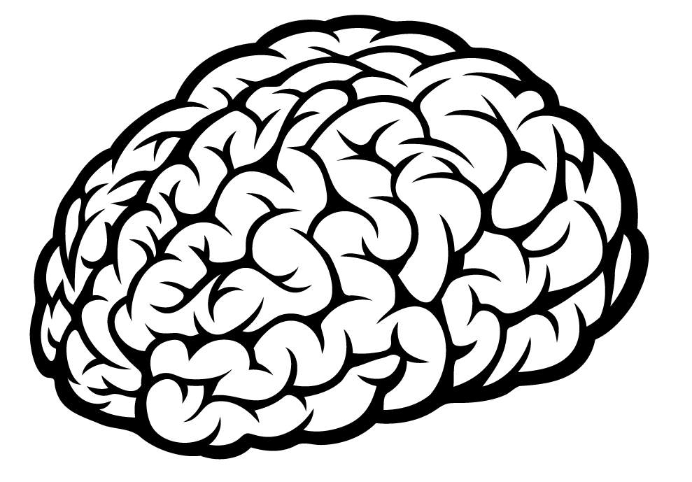 Brain Sketch With Lobes Outline Svg