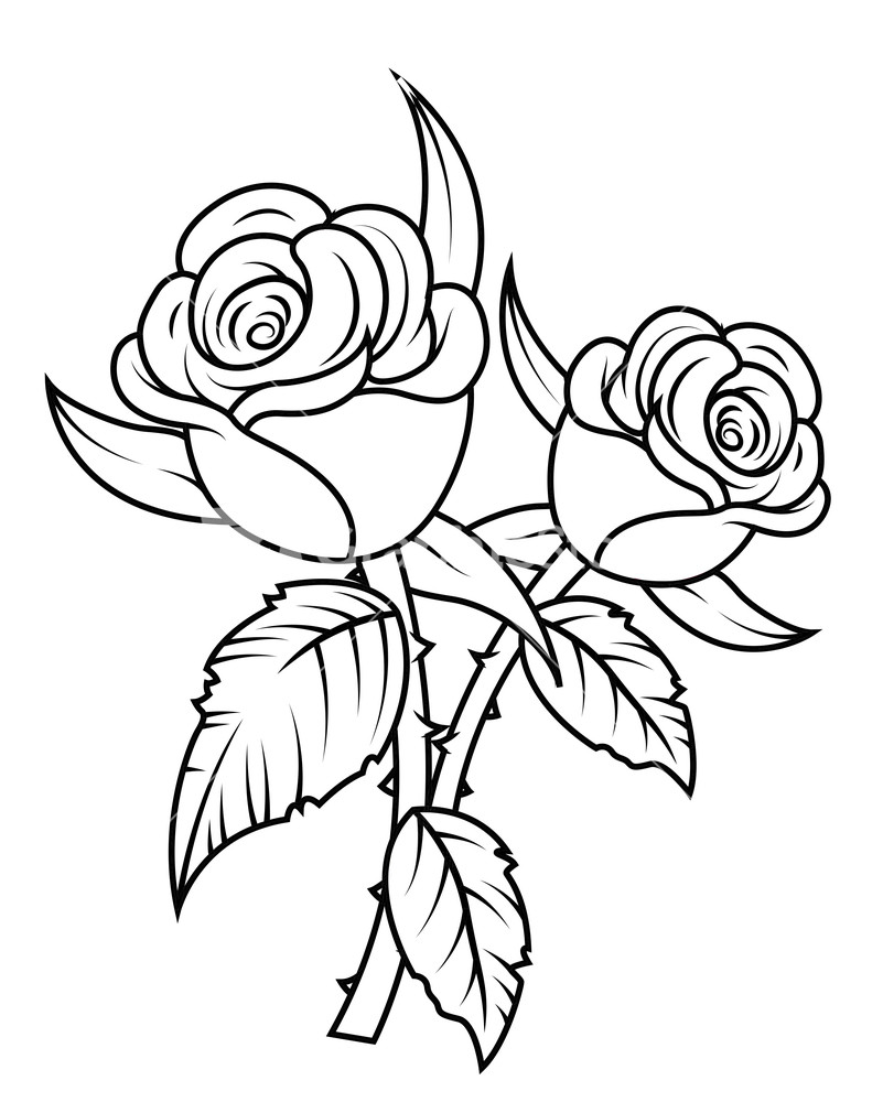 Black And White Rose Art