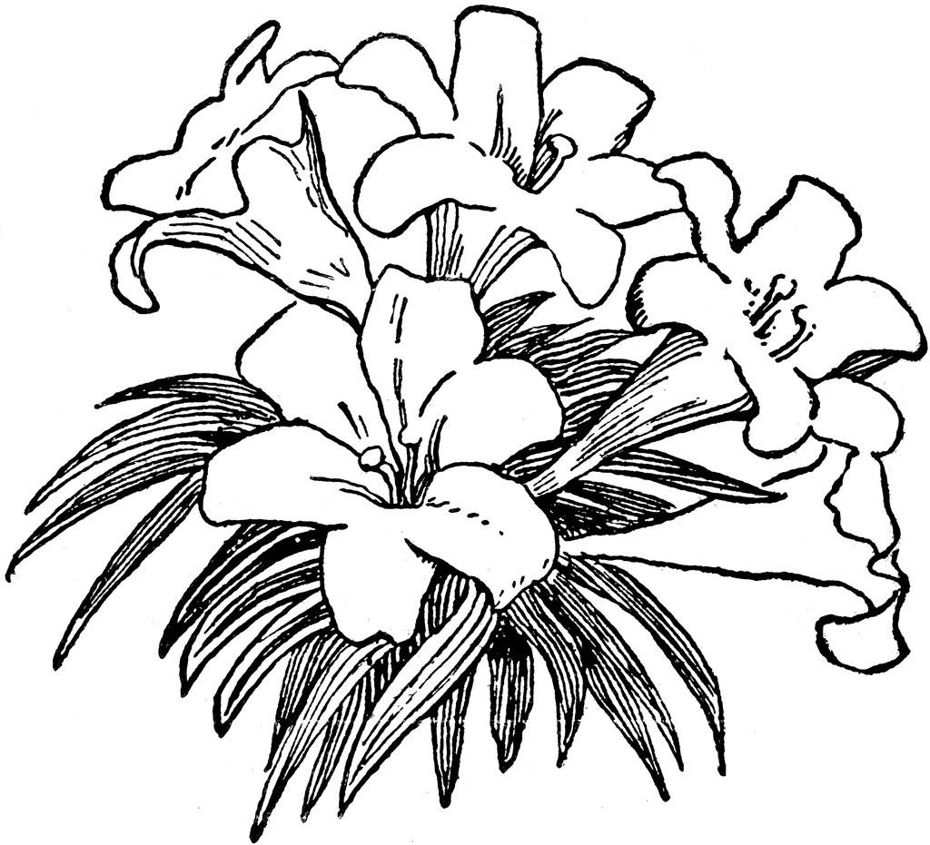 Flower Black And White Flower Clipart Black And White 7