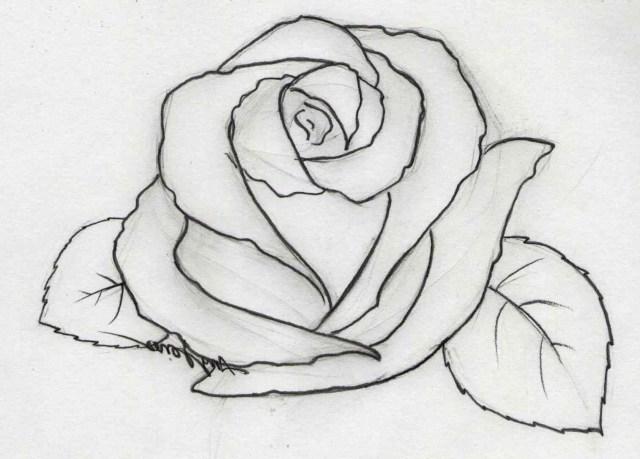 Pencil drawing rose flowers easy flower drawings in jpg ...