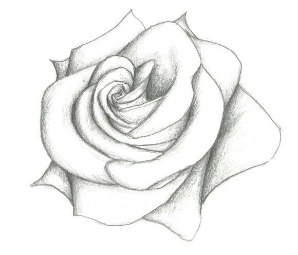 rose drawing Drawn rose pencil for kid pencil and inlor drawn jpg ...
