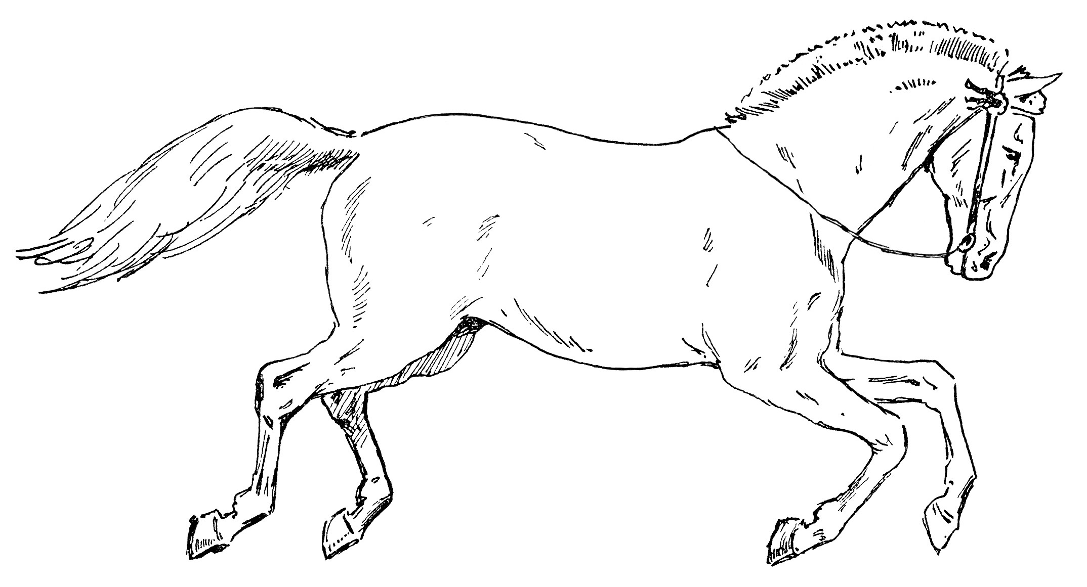 Running Horse Clipart Free Clipart Images
