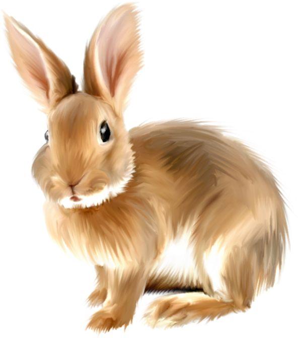Painted Bunny Clipart Clipart Bunnies Clipartix