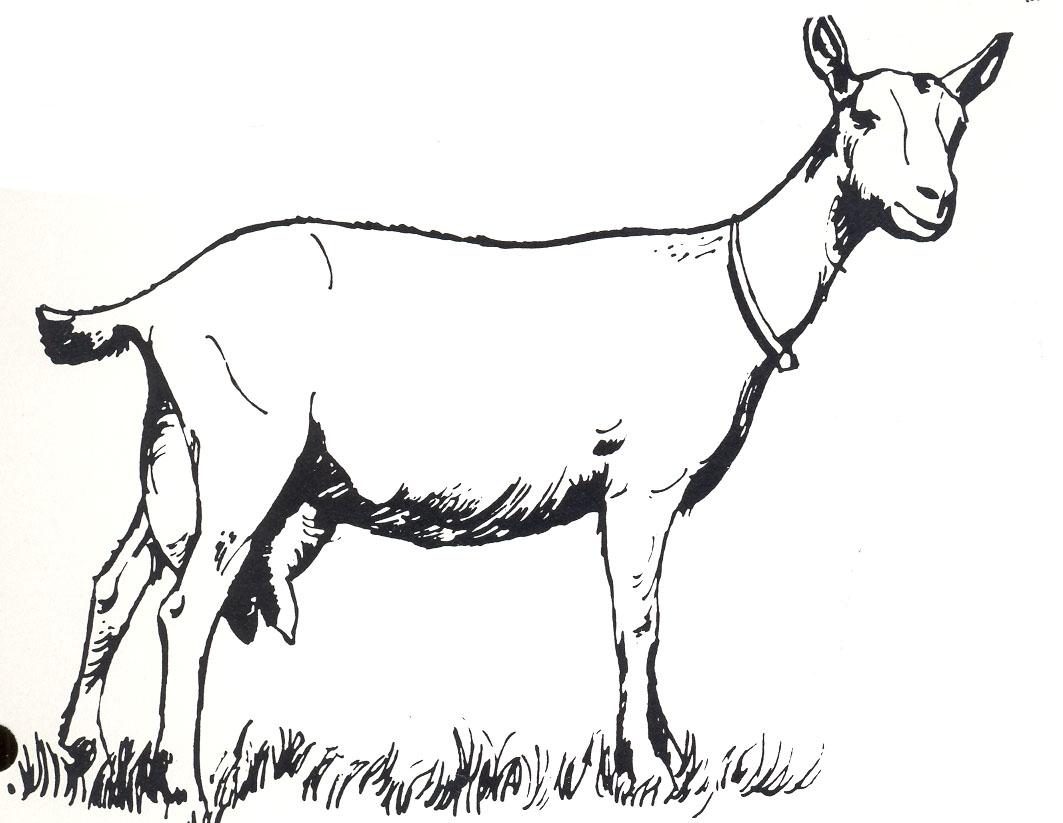 Goat Clipart Black And White Danaspdi Top