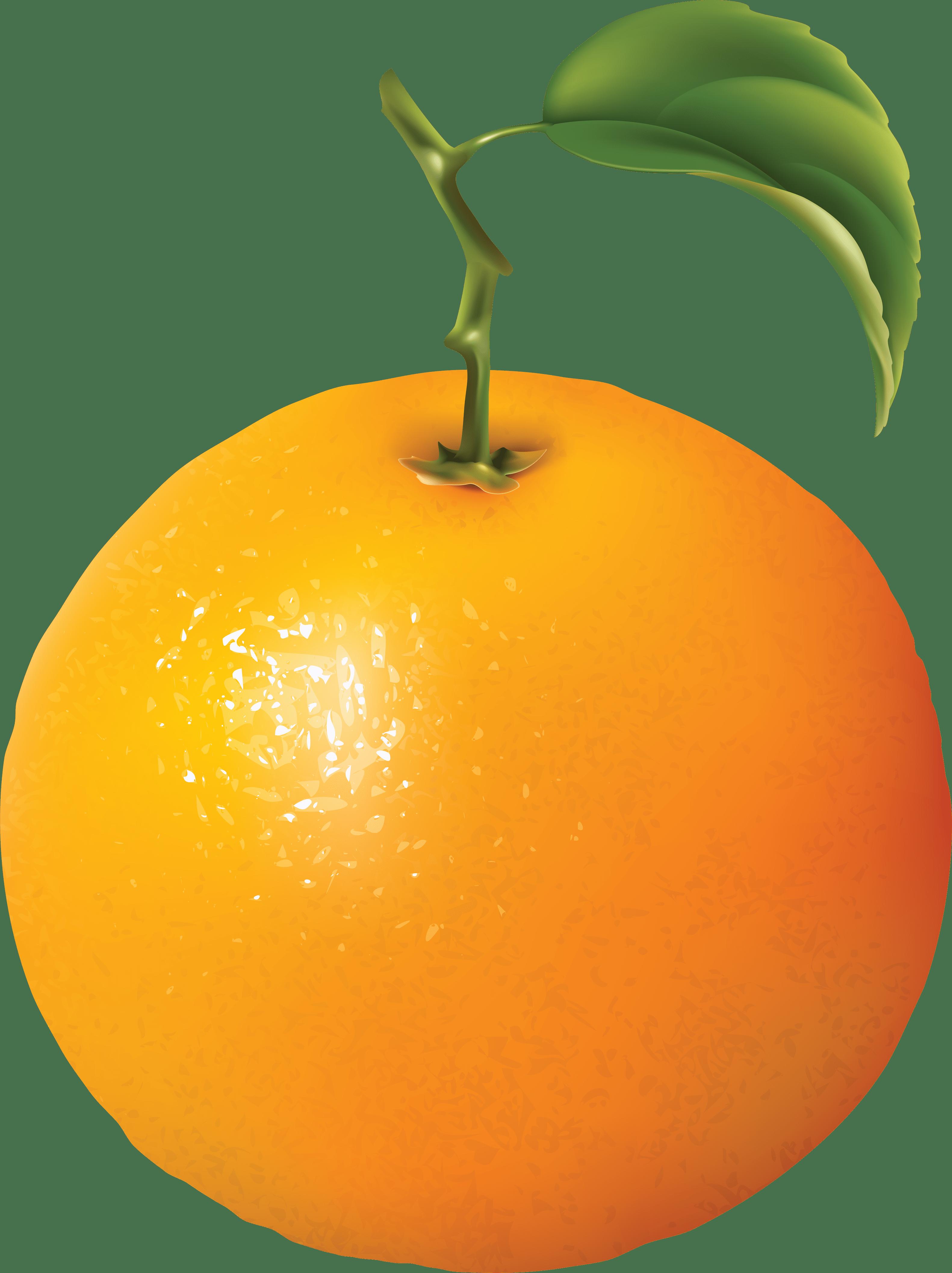 Orange Fruit Clipart Florida Pencil And In Color Orange