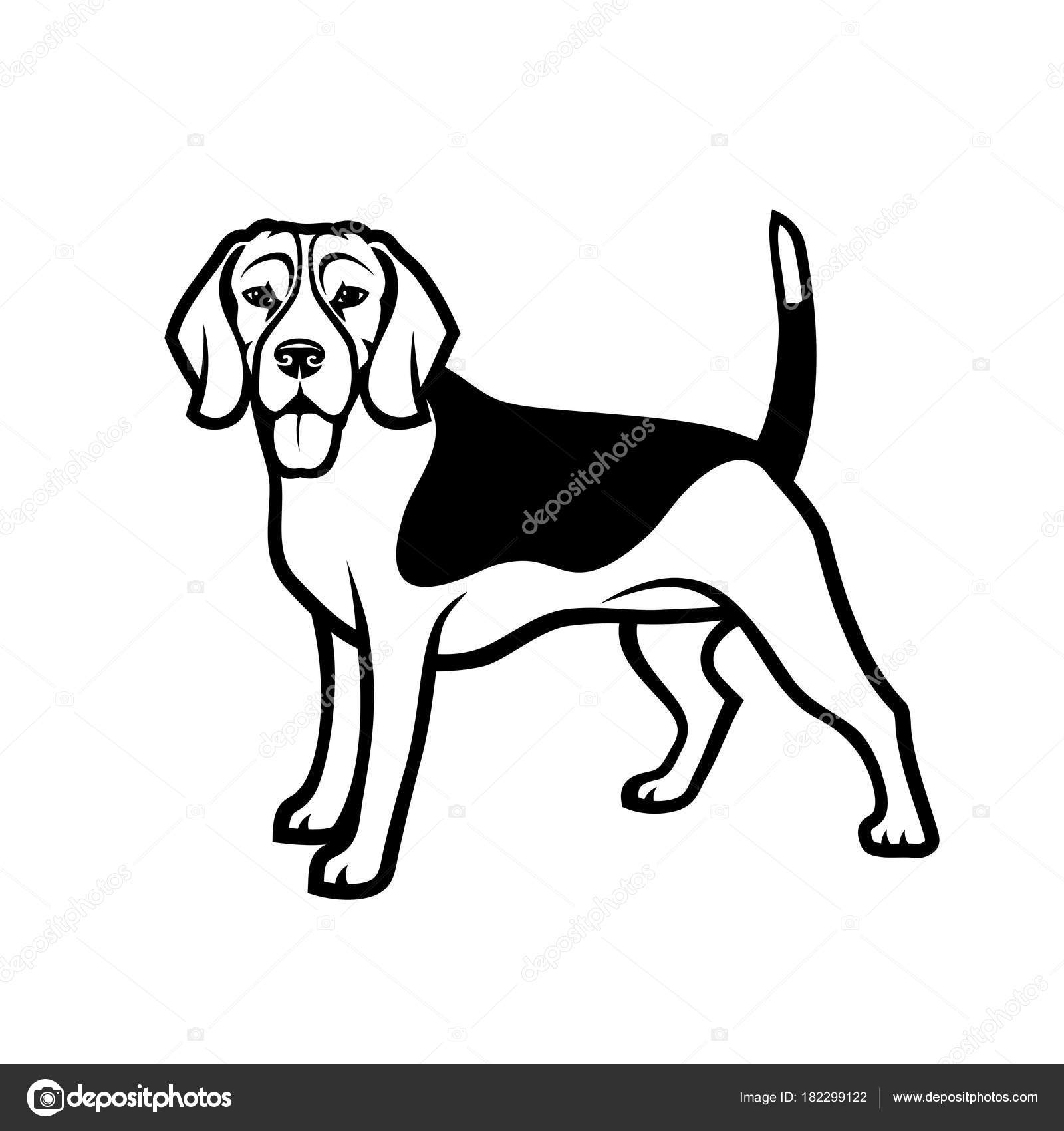 Coon Dog Drawings