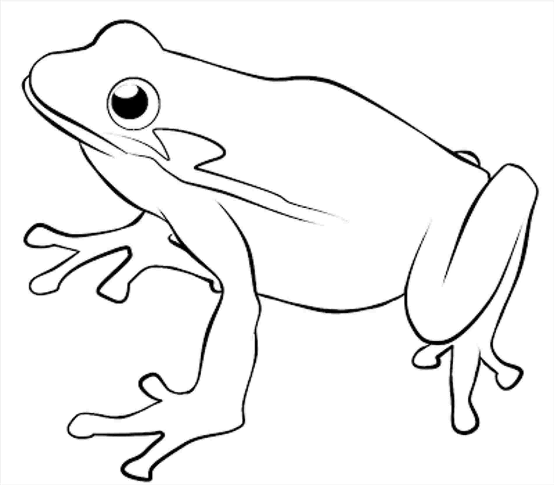 Coqui Frog Drawing