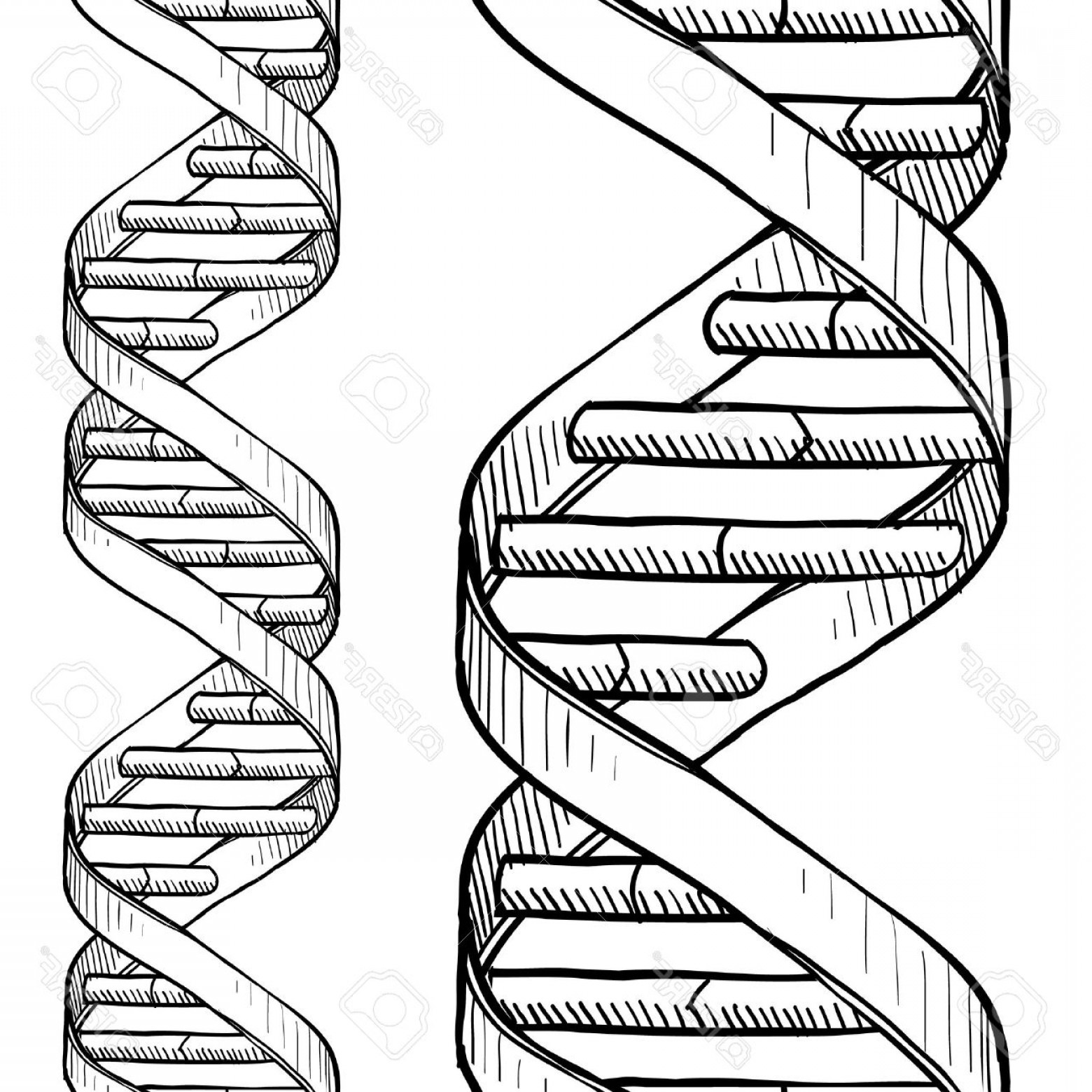 Zsksydny Coloring Pages 33 Dna The Double Helix Coloring