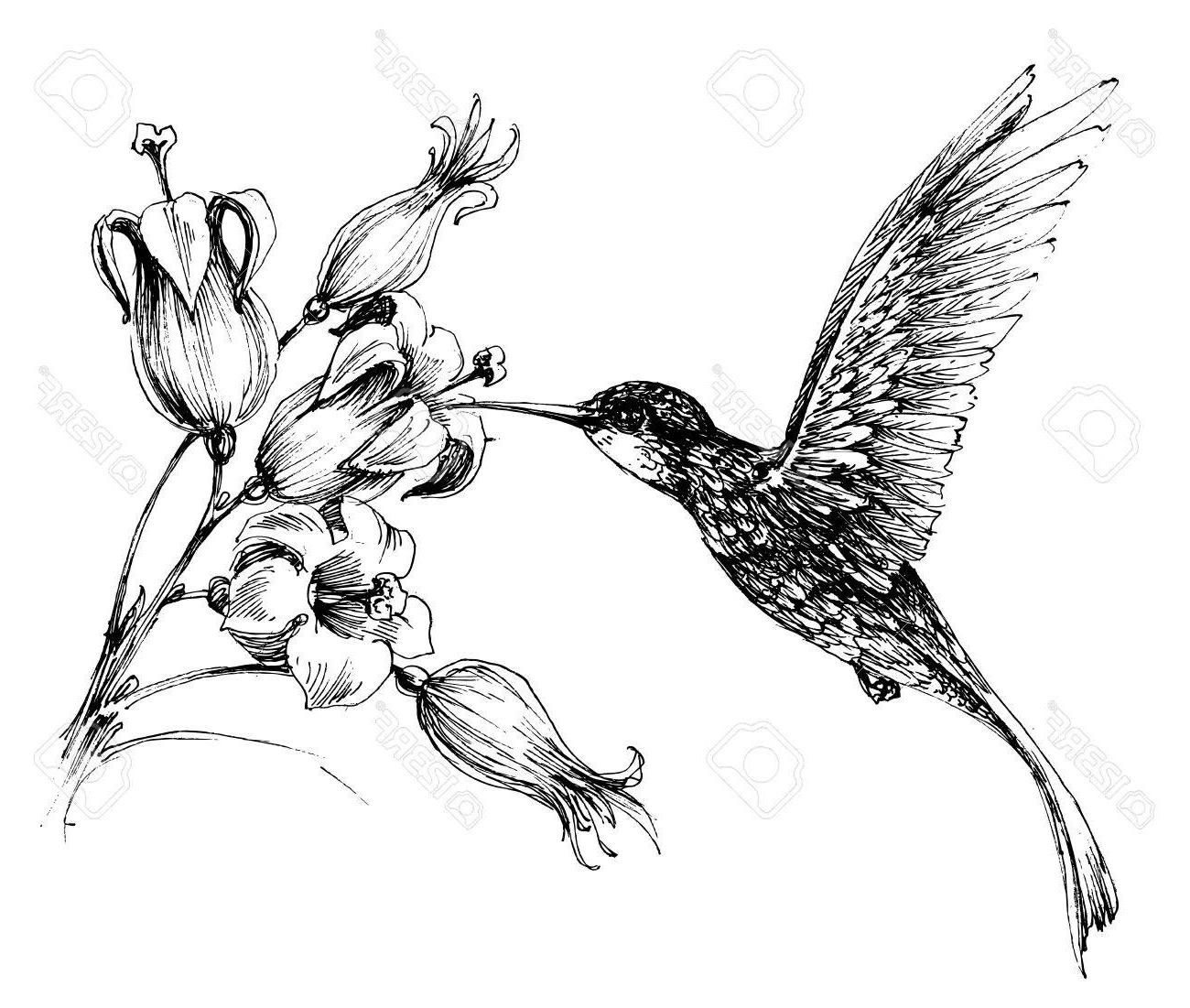 Drawings Of Hummingbirds And Flowers