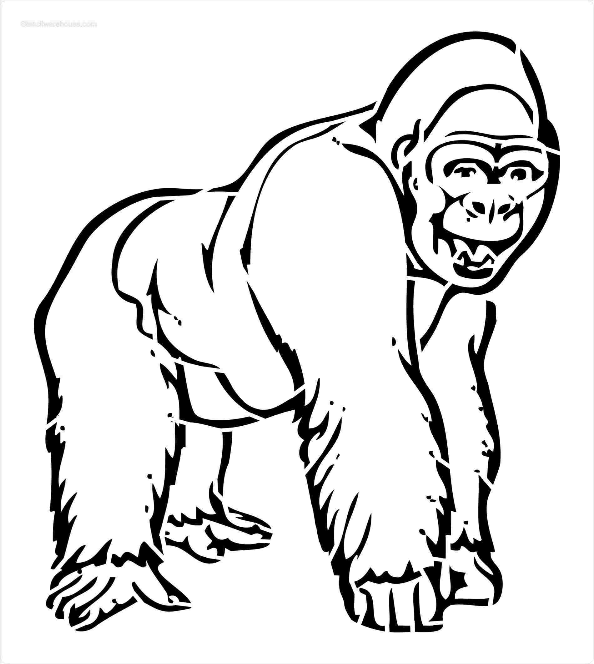 Lsu Drawings