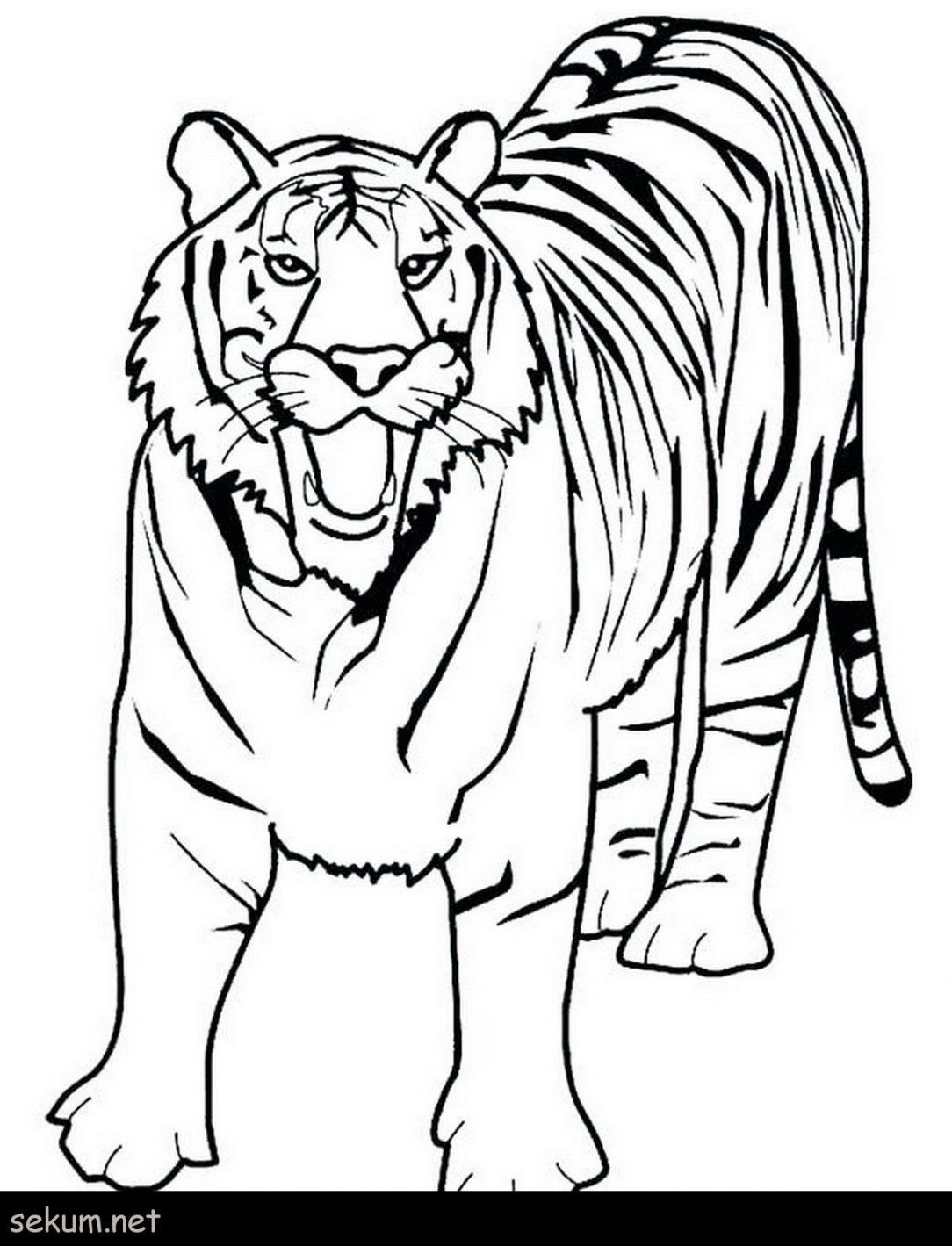 Lsu Tiger Drawing